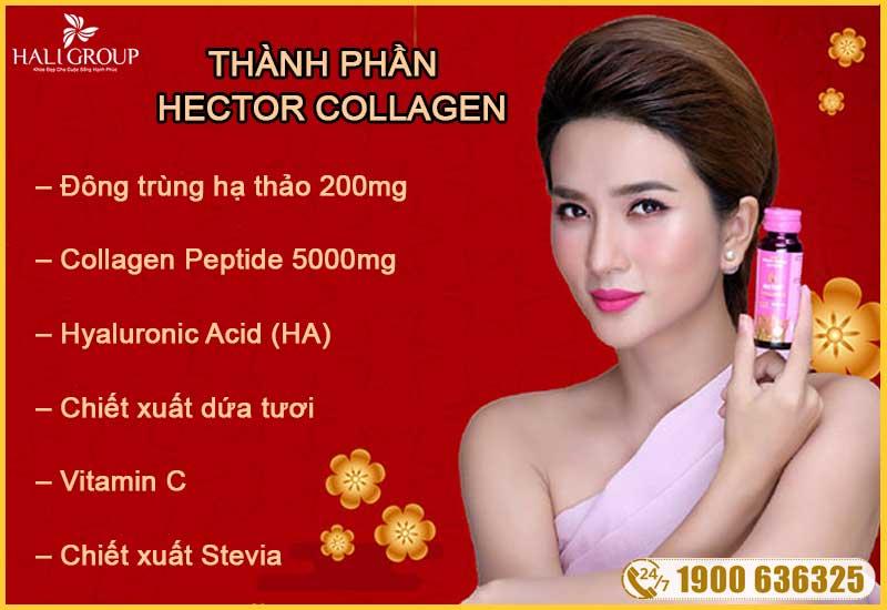 thành phần ưu việt của đông trùng hạ thảo hector collagen chính hãng