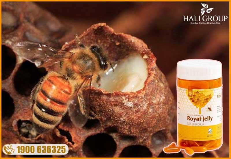 sữa ong chúa có trong thành phần viên uống sữa ong chúa schon royal jelly chính hãng